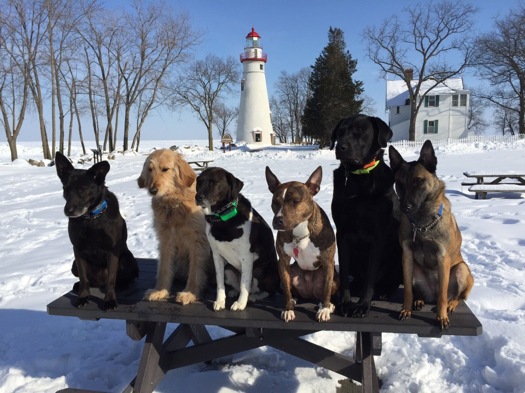 The pack posing before the Marblehead Lighthouse.